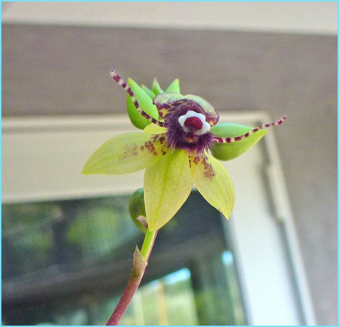 This small orchid flower looks like a little bee!